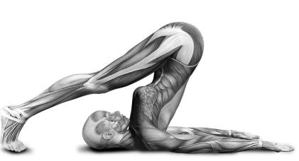 anatomiyaoga