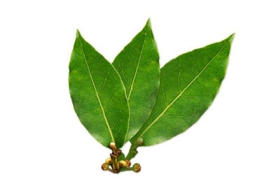 Antiinflamatorio natural - laurel