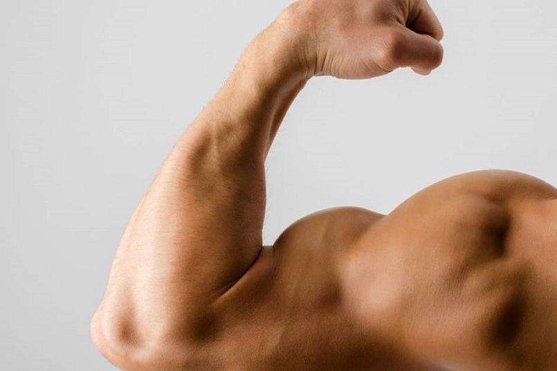 Cómo actúa la AMPK en el músculo