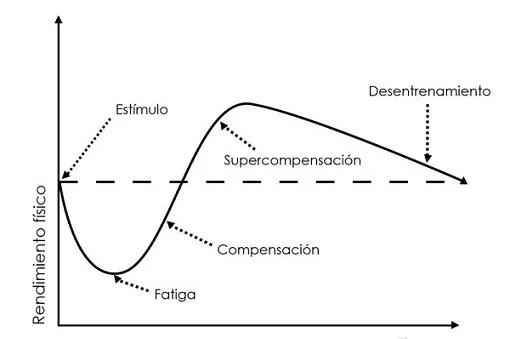 Table del Ciclo de Supercompensación