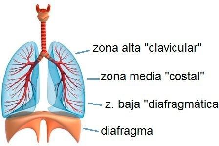 El proceso de la respiración en las personas