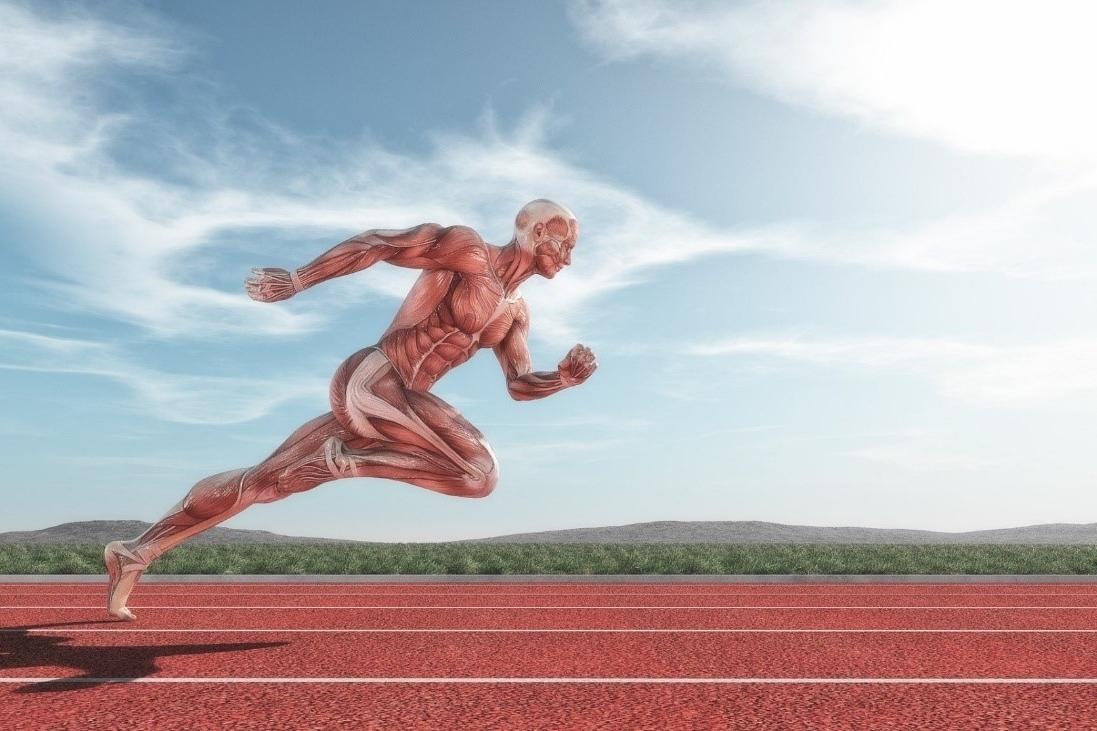 Entrenamiento con movimientos naturales del ser humano
