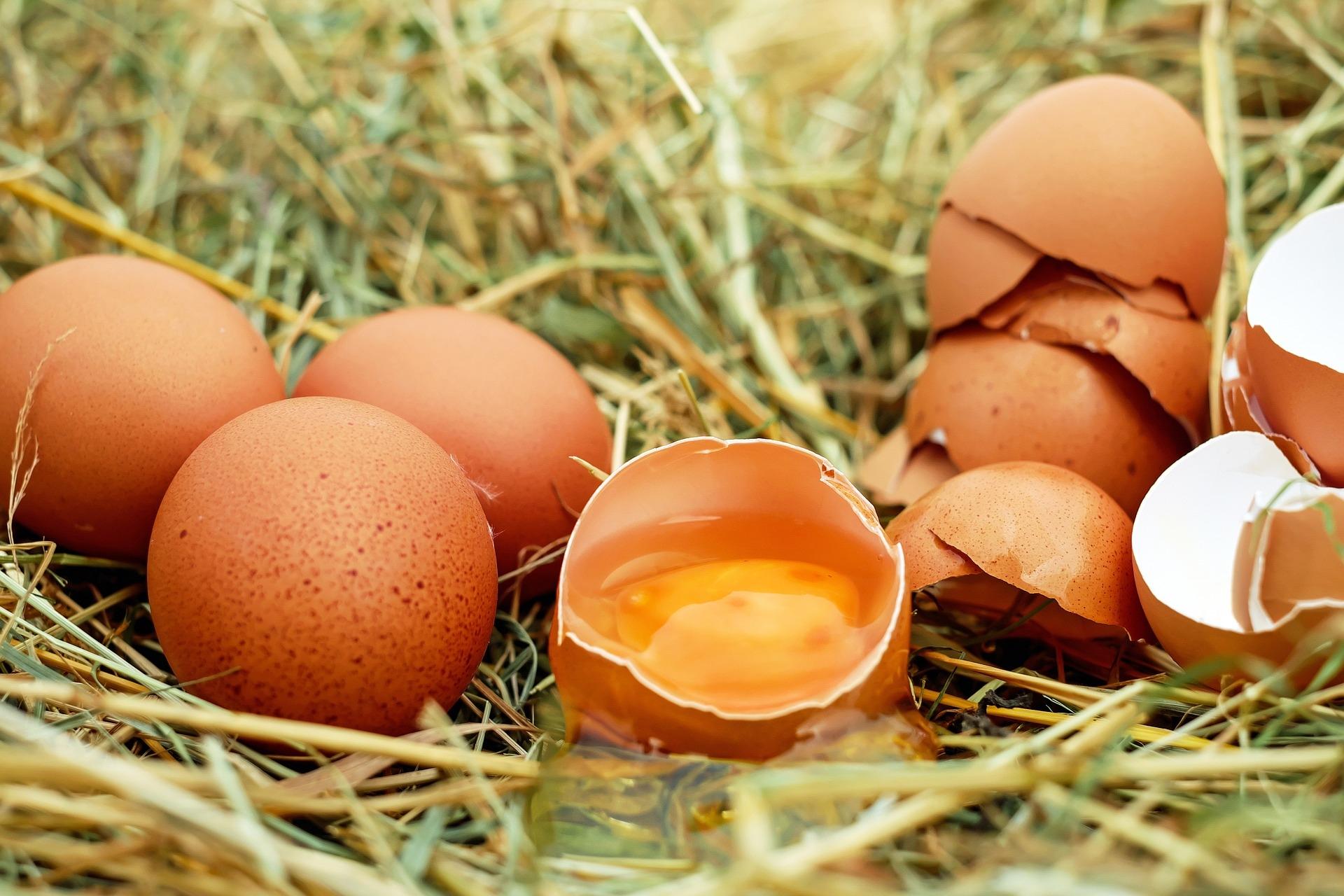 Especialistas Erradican Mitos Sobre el Consumo de Huevo