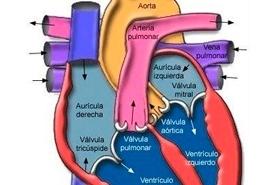 la frecuencia cardiaca en reposo
