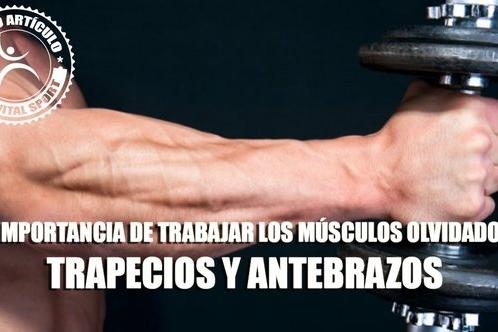 la-importancia-detrabajar-los-musculos-olvidados-trapecios-y-antebrazos