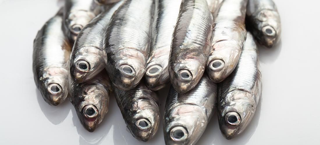 Las bondades del pescado y el peligro del mercurio