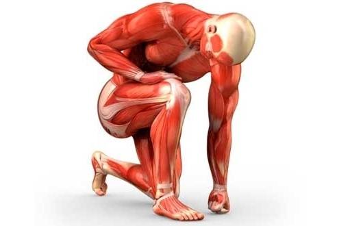 Lesiones en contra de la masa muscular