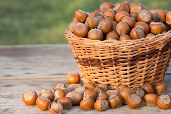 Mejores frutos secos para deportistas las avellanas