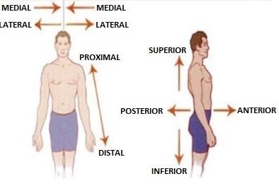 Movimientos biomecánicos del cuerpo humano