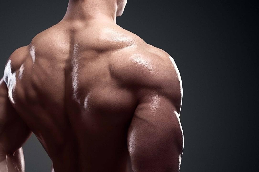 Músculos que trabaja el Press Militar