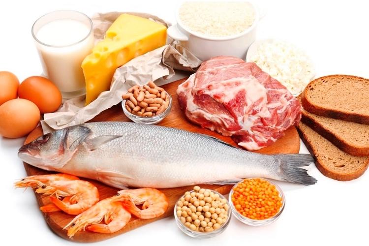 que es mejor proteína vegetal o animal