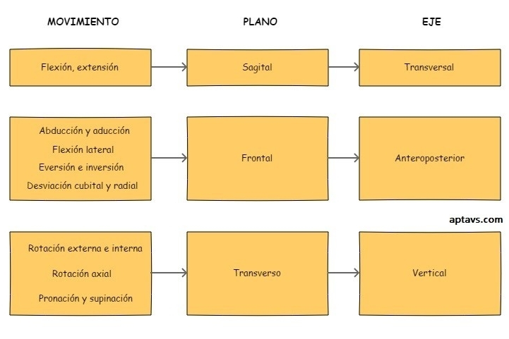 ¿Qué relación existe entre planos, ejes y movimientos?