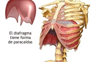 ¿Que es la respiración abdominal?