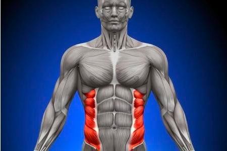 Sistema Abdominal - Obliquo externo o mayor del abdomen