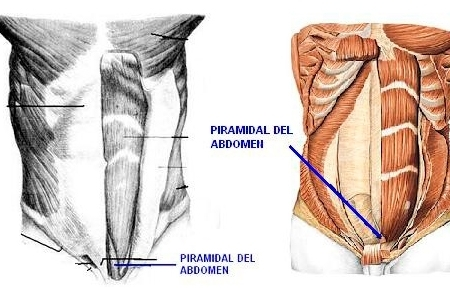 Sistema Abdominal - Piramidal del abdomen