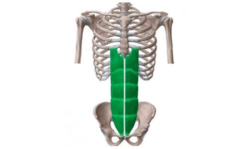 Tipos de abdominales, como hacer ejercicios, beneficios